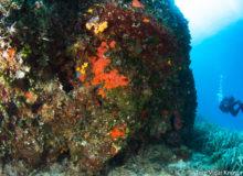 Diving scuba courses