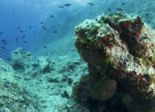 Diving scuba courses in croatia