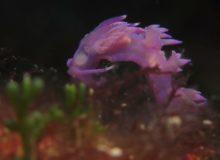 Diving scuba courses in croatia
