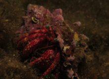Diving Center Croatia