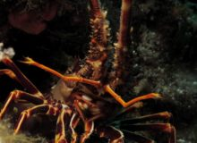 Diving scuba courses Hvar
